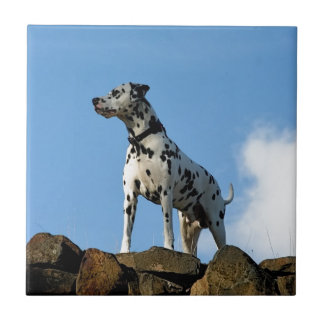 Beau Dog Small Square Tile