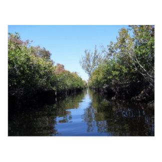 Beau Florida Everglades Postcard