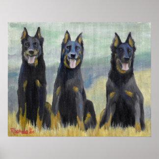 Beauceron Dog Portrait Poster