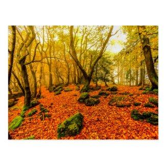 Beaulieu Woods Postcard