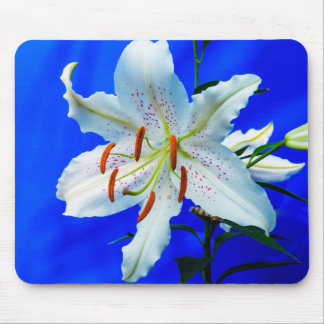 Beautifil white lily with royal blue background mouse mat