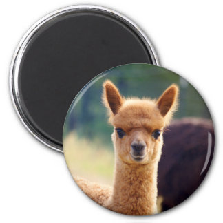 Beautiful Alpaca Magnets
