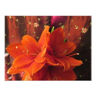 Beautiful Amaryllis Flowers Photographic Print