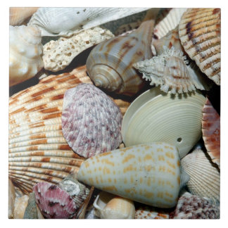 Beautiful array of Shells Large Square Tile