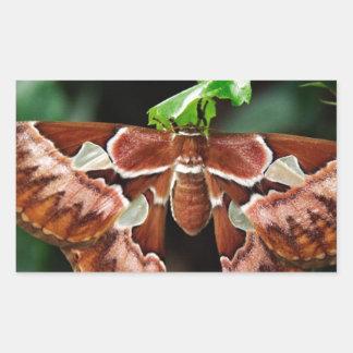 Beautiful Atlas Moth Rectangular Sticker