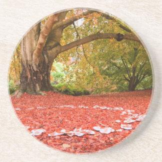 Beautiful Autumn Fall Nature Fairy Ring Drink Coasters