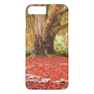 Beautiful Autumn Fall Nature Fairy Ring iPhone 8 Plus/7 Plus Case