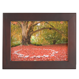 Beautiful Autumn Fall Nature Fairy Ring Memory Boxes