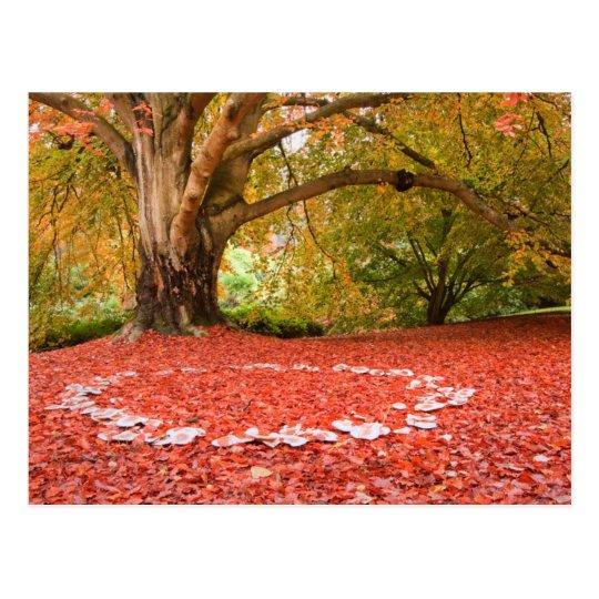 Beautiful Autumn Fall Nature Fairy Ring Postcard