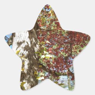 Beautiful Autumn Leaves Star Sticker