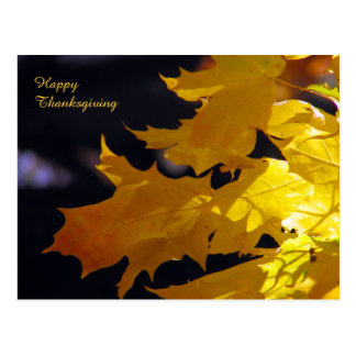 Beautiful Autumn Leaves Thanksgiving Greeting Postcard