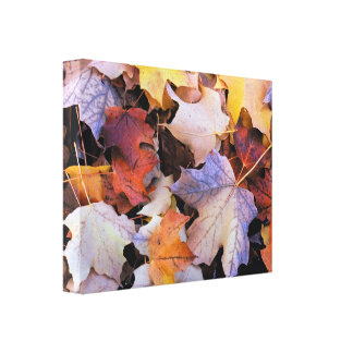 Beautiful Autumn Leaves Wrapped Canvas Prints