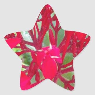 Beautiful Awesome Red flowers Star Sticker