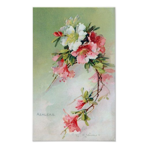 Beautiful Azaleas Vintage Art Poster