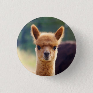 Beautiful Baby Alpaca Buttons
