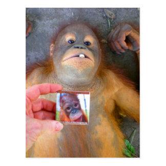 Beautiful Baby Zazzle Fan Postcard