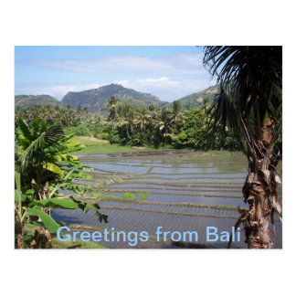 Beautiful Bali Rice Paddies Postcard