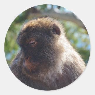 Beautiful Barbary Ape Classic Round Sticker