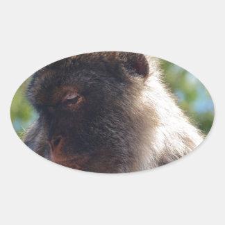 Beautiful Barbary Ape Oval Sticker