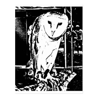 Beautiful Barn Owl in a Black & White Graphic Postcards