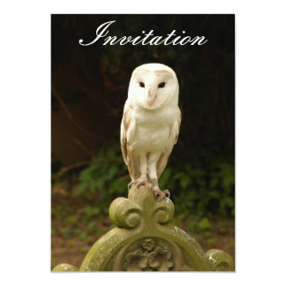 Beautiful Barn Owl Invitation