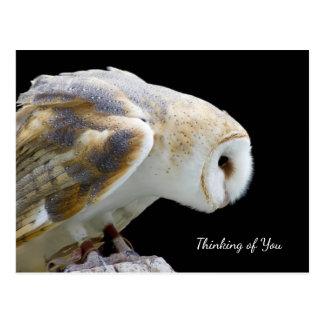 Beautiful Barn Owl Photograph Thinking of You Postcard
