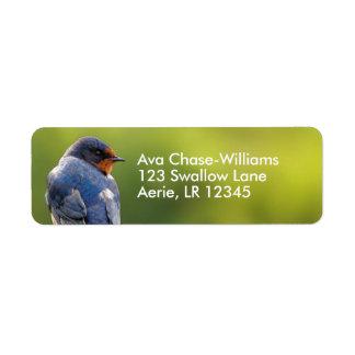 Beautiful Barn Swallow