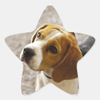 Beautiful Beagle Star Stickers