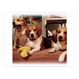 Beautiful Beagles Postcard