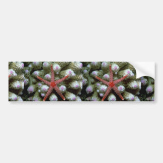 Beautiful Beautiful starfish Bumper Sticker