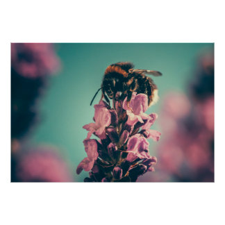 Beautiful bee flower nature scenery poster