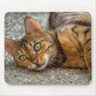 Beautiful Bengal Cat Mousepads