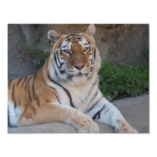 Beautiful Bengal Tiger Card