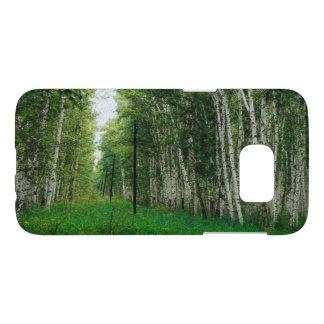 Beautiful Birch Tree Forest