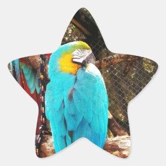 Beautiful Birds Star Sticker