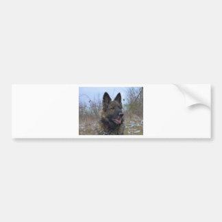 beautiful black and tan German Shepherd puppy Bumper Sticker