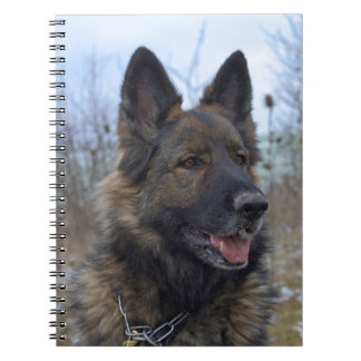 beautiful black and tan German Shepherd puppy Notebooks