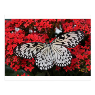 Beautiful black and white Butterfly Postcard