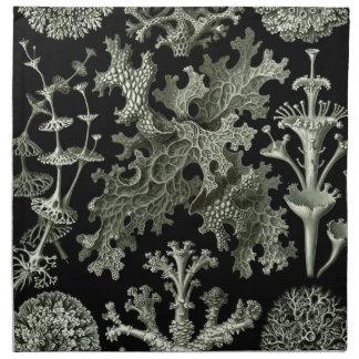 Beautiful black and white lichens drawing napkin