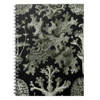 Beautiful black and white lichens drawing spiral notebook
