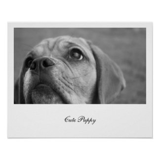 Beautiful black and white photography puppy dog poster