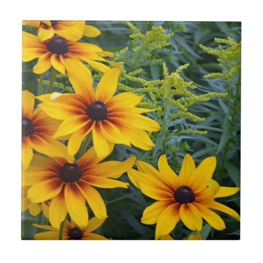 Beautiful black eyed susan flower garden tile