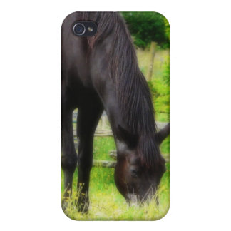 Beautiful Black Horse iPhone 4 Covers