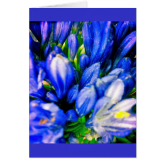 Beautiful Blue Agapanthus Blank Greeing Card