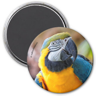 Beautiful Blue and Gold Macaw 7.5 Cm Round Magnet