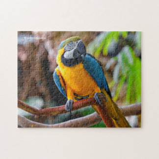 Beautiful Blue and Gold Macaw Puzzle