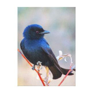 Beautiful blue bird nature scenery canvas prints