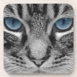 Beautiful blue eyed cat portrait drink coasters