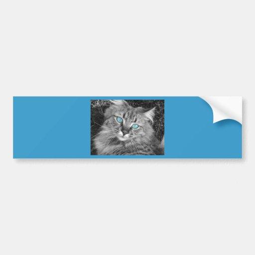Beautiful Blue Eyed Kitty Bumper Sticker