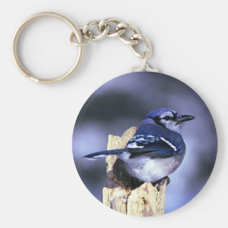 Beautiful Blue Jay bird Basic Round Button Key Ring